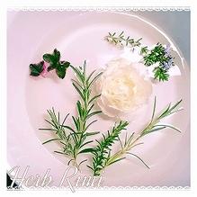 9/2(日)優しいハーブの香りのワークショップ :写真
